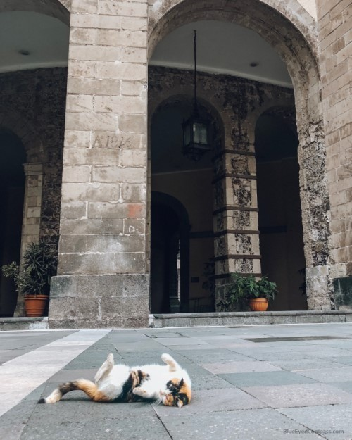 cat inside National Palace, Mexico City Travel Guide