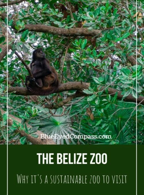 Visiting the Belize Zoo
